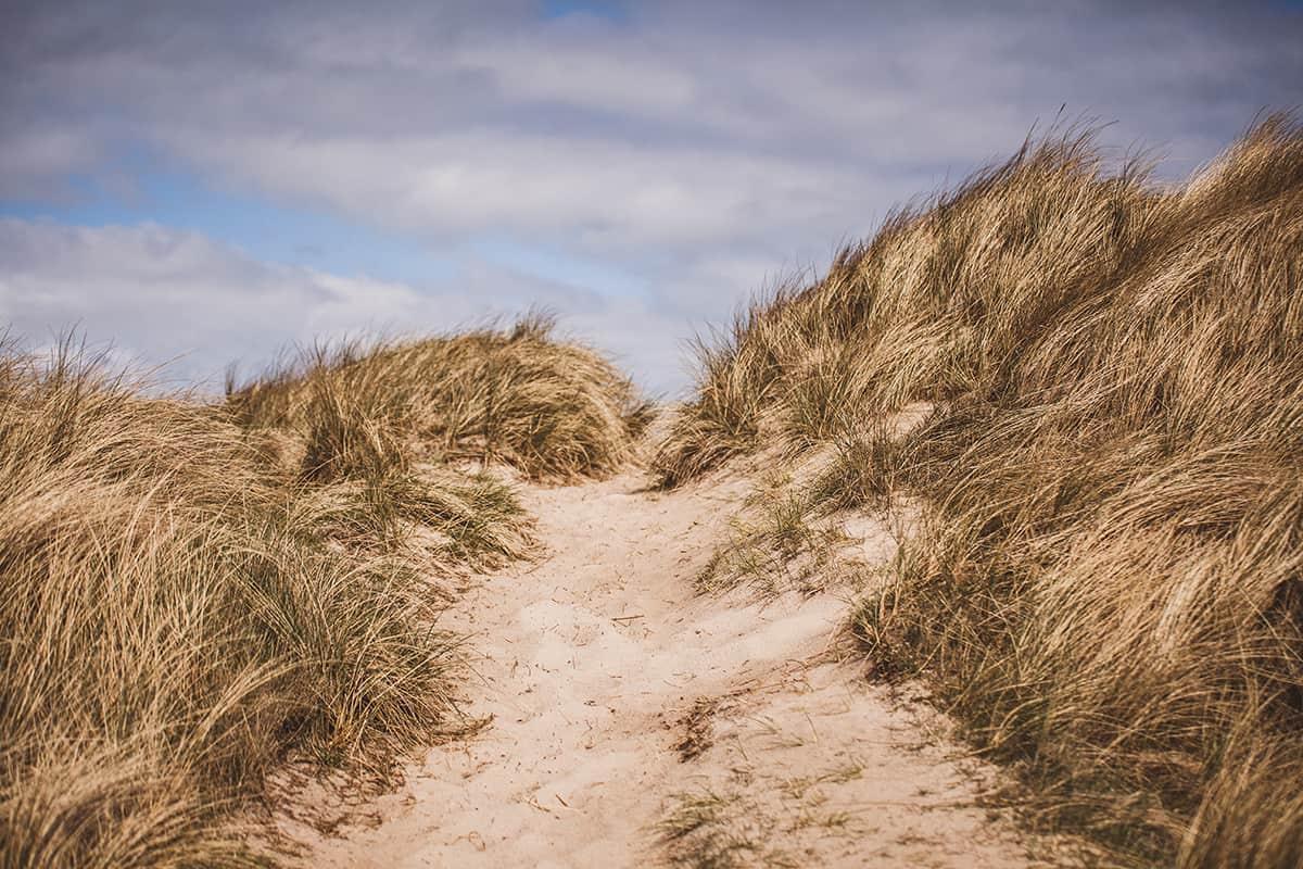 List Ellenbogen Düne Strand