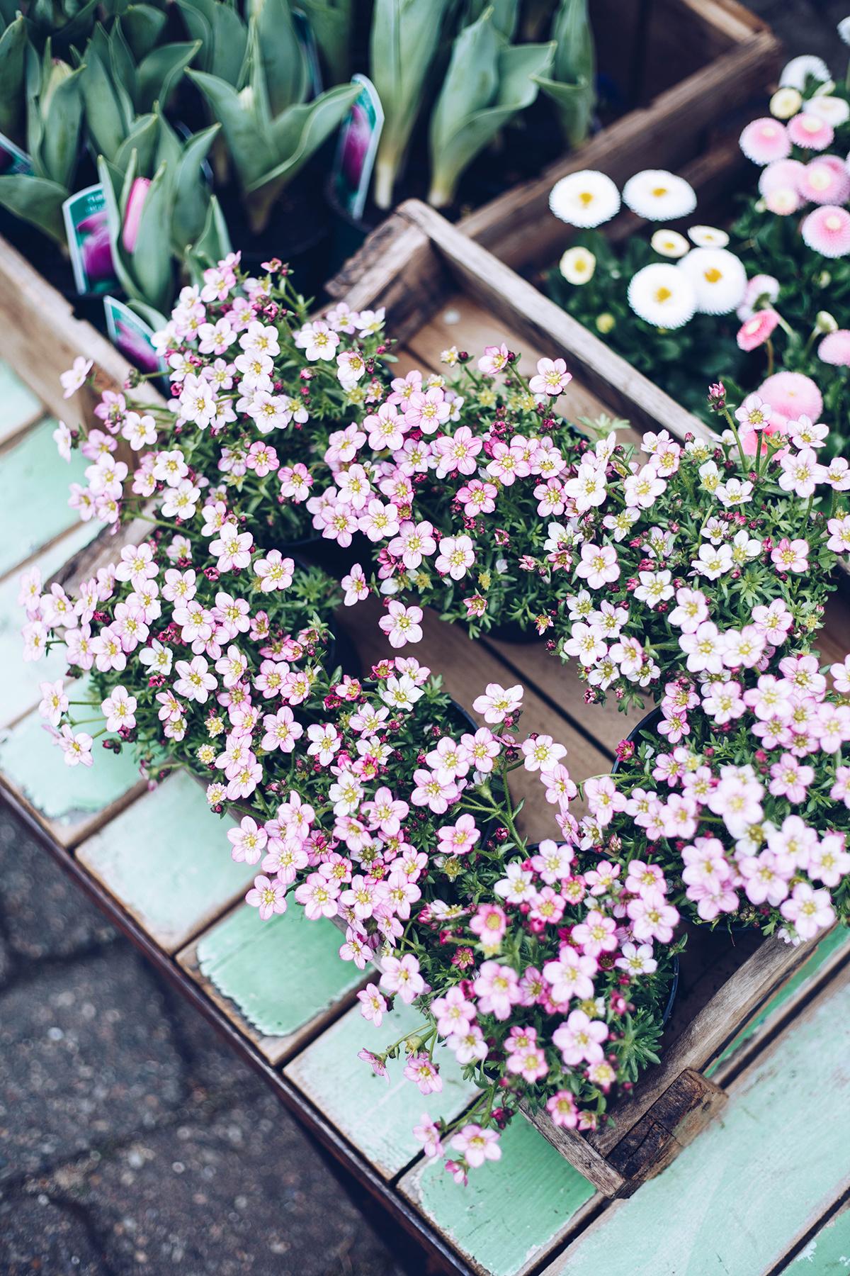 Blumen Hansen Westerland Sylt