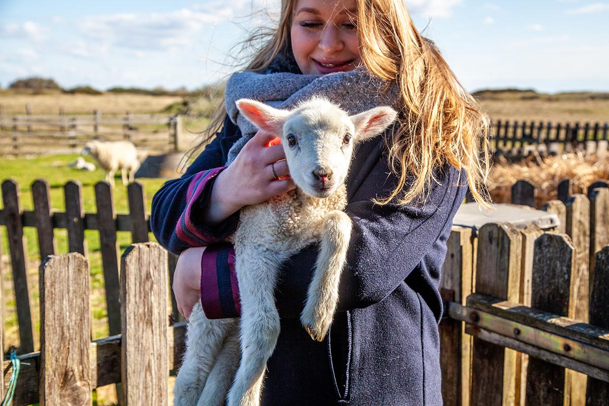 Inselgesichter: Ich habe mich mit Schafhalter Jürgen Wolf-Diedrichsen getroffen und mich mit ihm über seine Schafe am Lister Ellenbogen unterhalten
