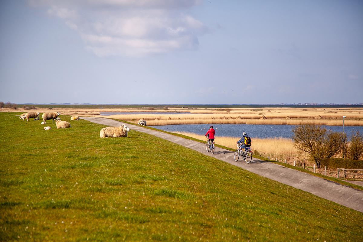 Fahrradtour auf dem Deich in Morsum
