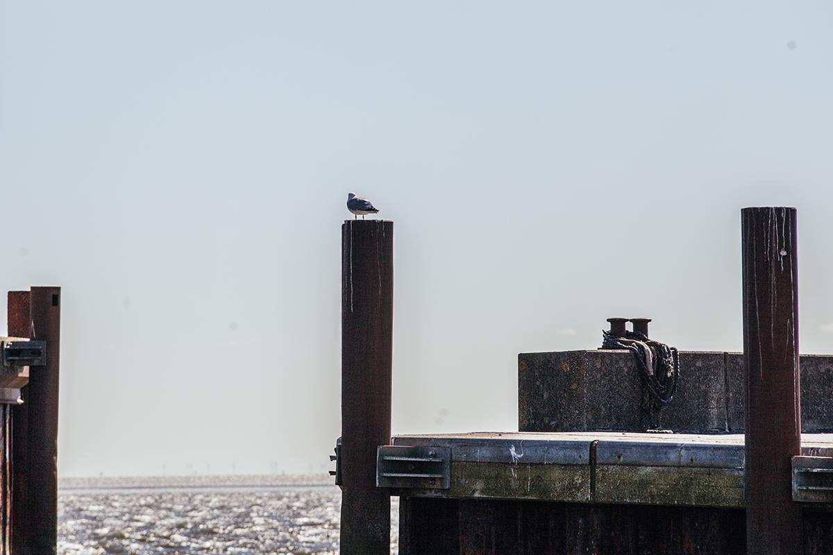 Ausflugsfahrten zu den Seehundbänken ab List mit Adler-Schiffe auf Sylt