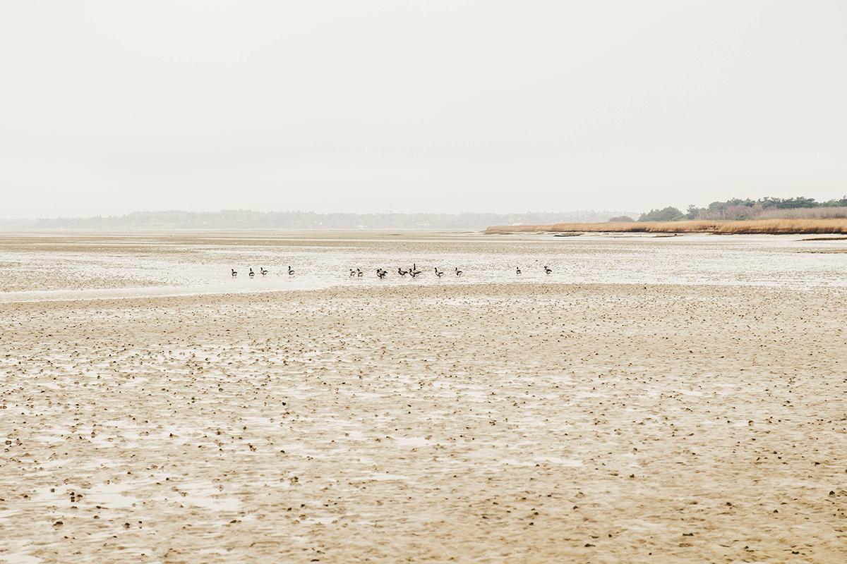 Ich habe an einer geführten Wattwanderung an der Vogelkoje in Kampen teilgenommen