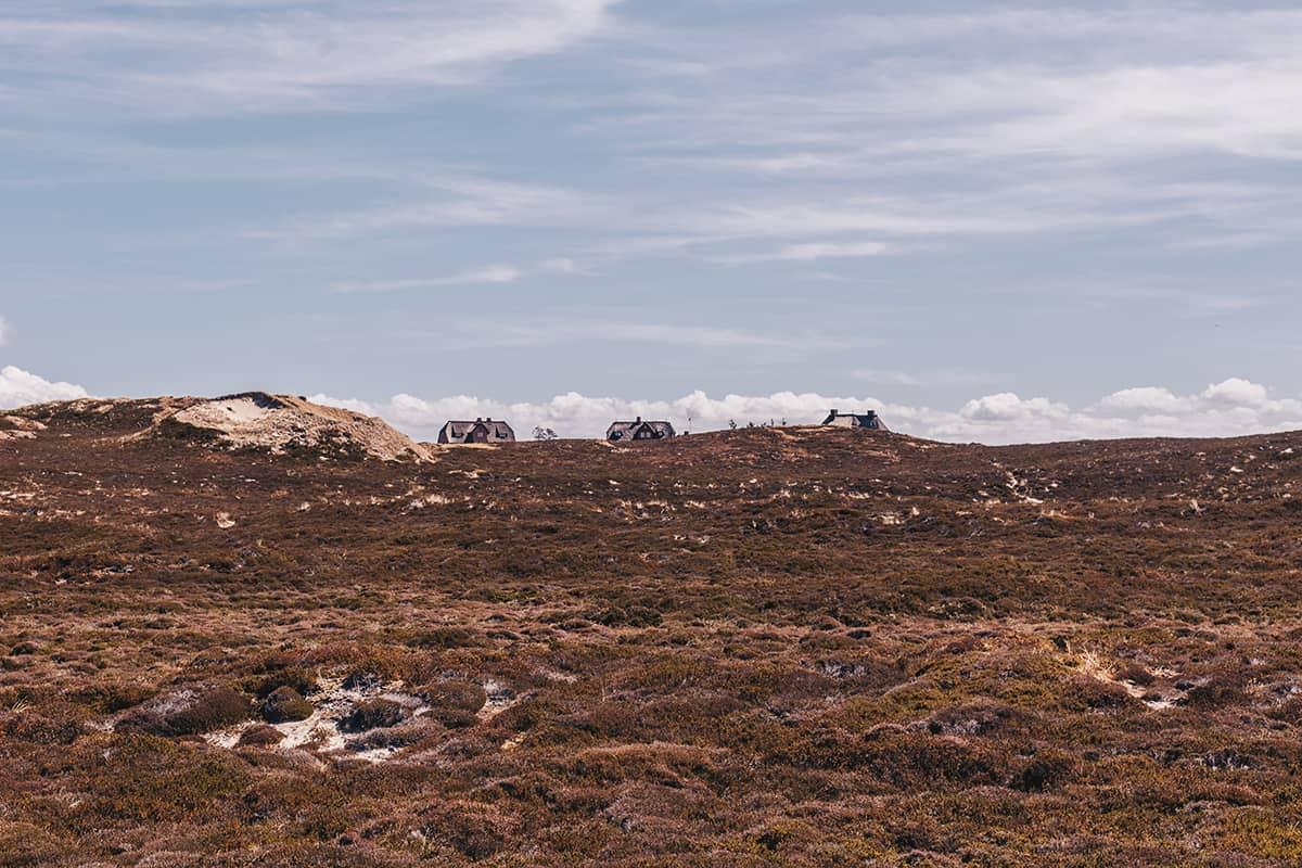 Listland mit Reetdachhäusern in der Heidelandschaft