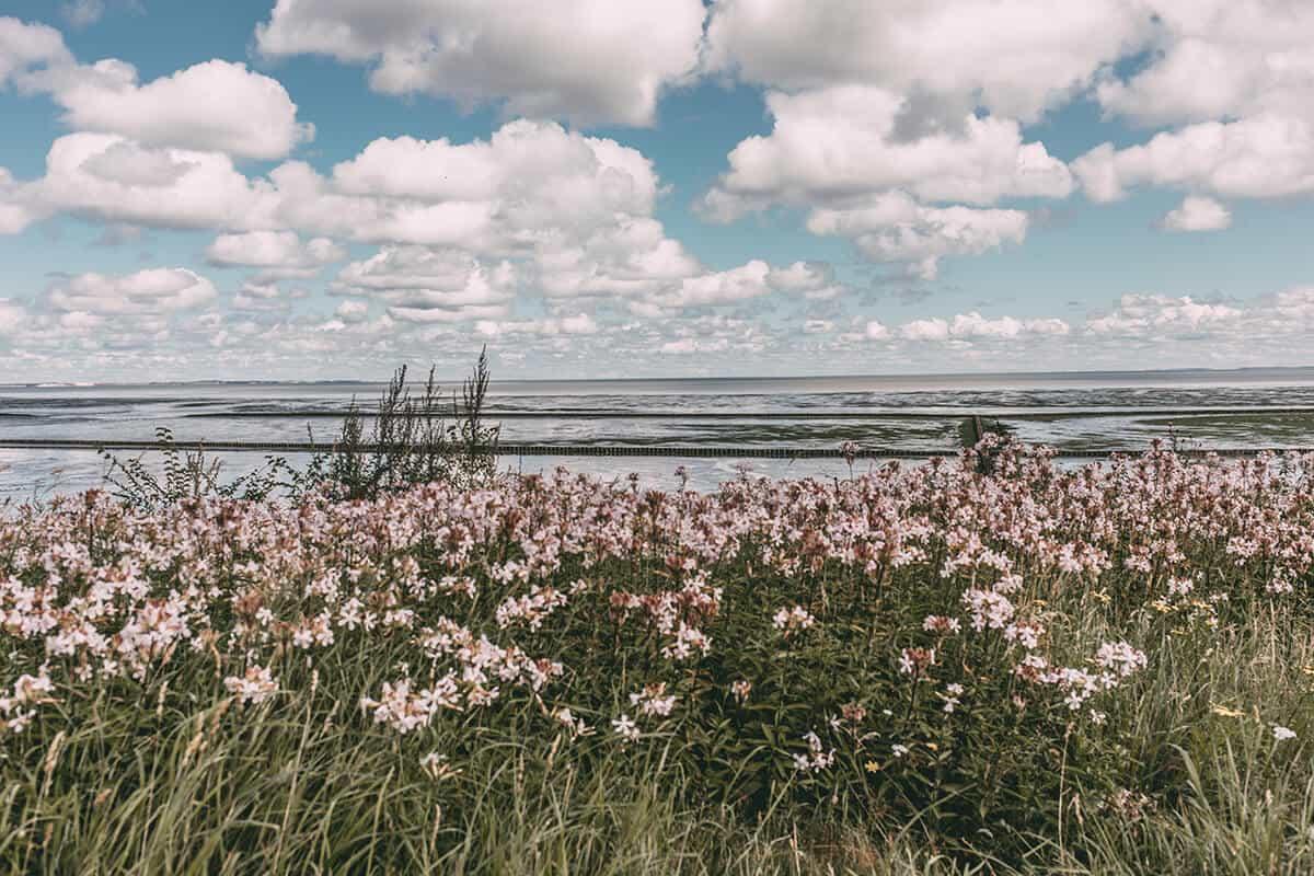 Wattenmeer Keitum Sylt