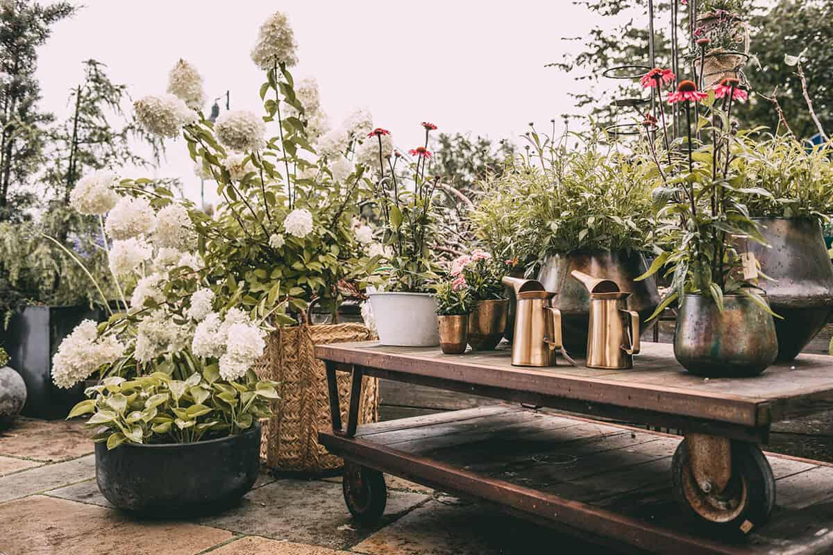 Pflanzen Blumenladen Keitum Alte Wäscherei