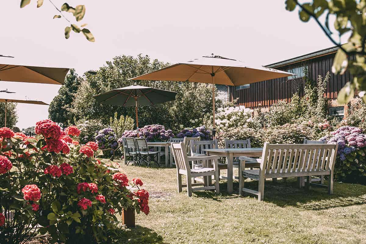 Hofcafé Klein'er Kuhstall in Tinnum: Garten Hortensien